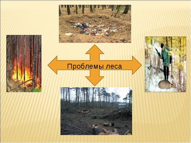 Проблемы леса