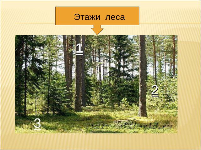 1 2 3 Этажи леса