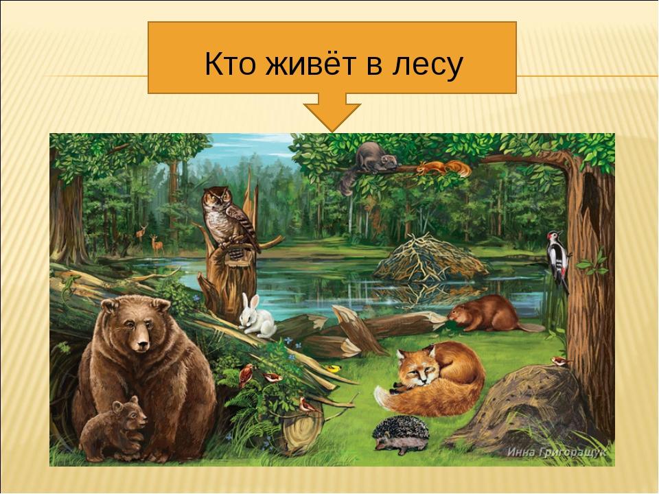 Кто живёт в лесу