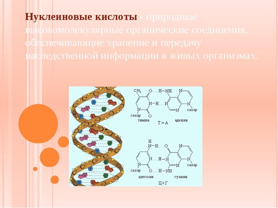 Нуклеиновые кислоты - природные высокомолекулярные органические соединения,...