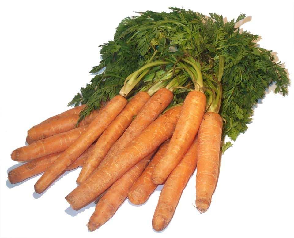 Описание: Carrots