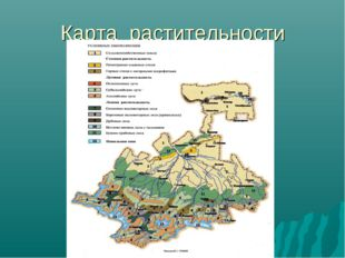 Карта растительности
