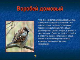 Воробей домовый Одна из наиболее широко известных птиц, живущих по соседству