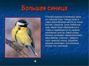 Большая синица Распространена в лиственных лесах. это осёдлая птица. Гнёзда с