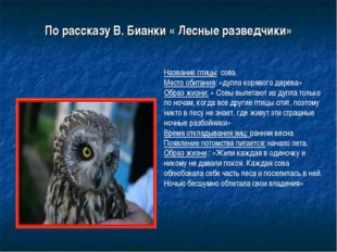 По рассказу В. Бианки « Лесные разведчики» Название птицы: сова. Место обитан