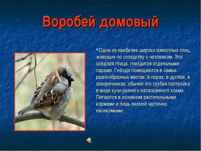 Воробей домовый Одна из наиболее широко известных птиц, живущих по соседству...