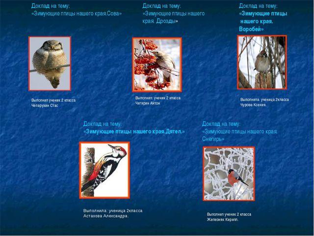 Доклад на тему: «Зимующие птицы нашего края.Сова» Выполнил ученик 2 класса Че...