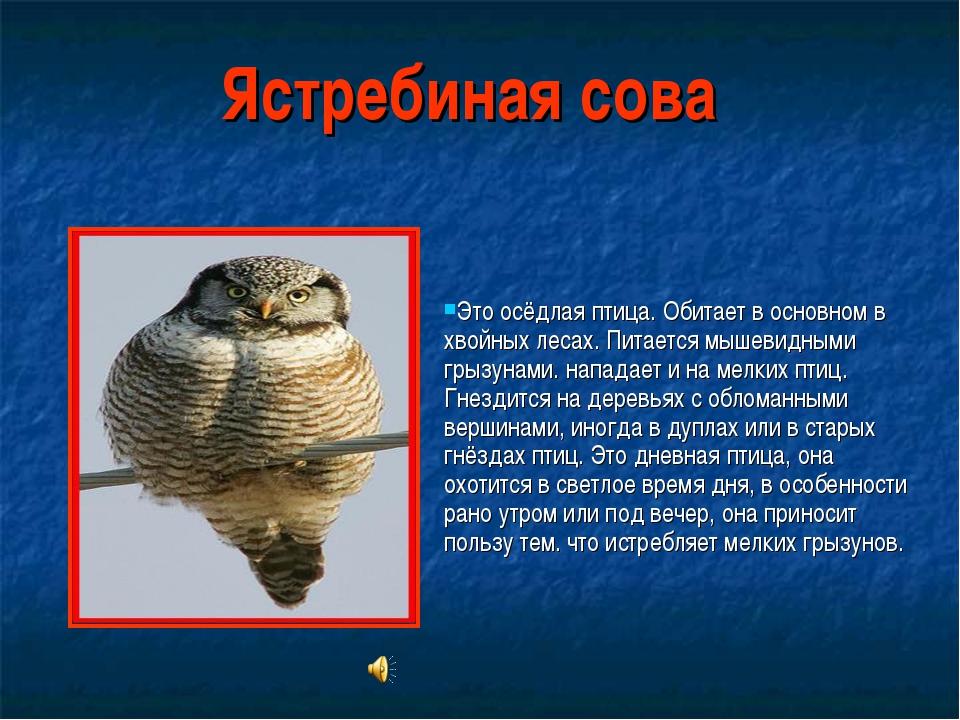 Ястребиная сова Это осёдлая птица. Обитает в основном в хвойных лесах. Питает...
