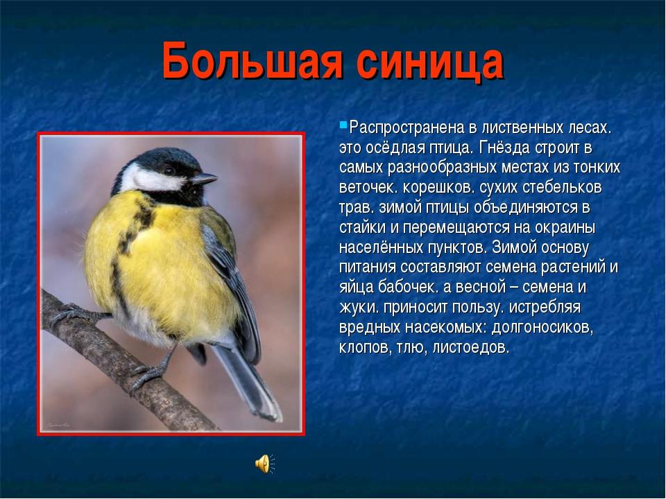 Большая синица Распространена в лиственных лесах. это осёдлая птица. Гнёзда с...