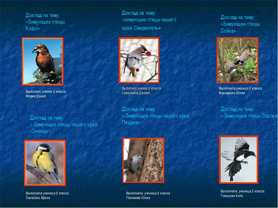 Доклад на тему: «Зимующие птицы. Клёст» Выполнил: ученик 2 класса Морев Данил...