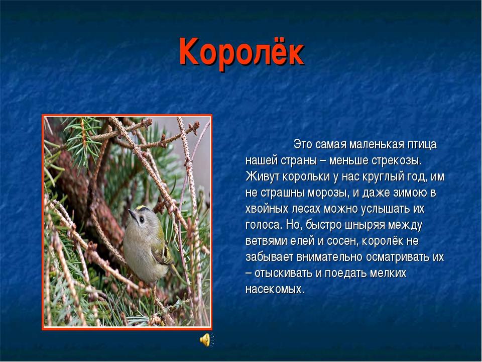 Королёк Это самая маленькая птица нашей страны – меньше стрекозы. Живут коро...
