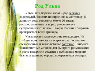 Род Ульва Ульва, или морской салат – родзелёных водорослей, близких по стро