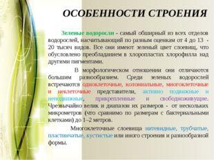 ОСОБЕННОСТИ СТРОЕНИЯ Зеленые водоросли - самый обширный из всех отделов