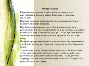 Размножение. Размножение пресноводной водоросли происходит вегетативным пут