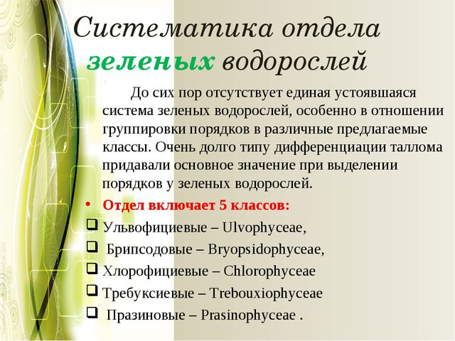 Систематика отдела зеленых водорослей До сих пор отсутствует единая устоявша...