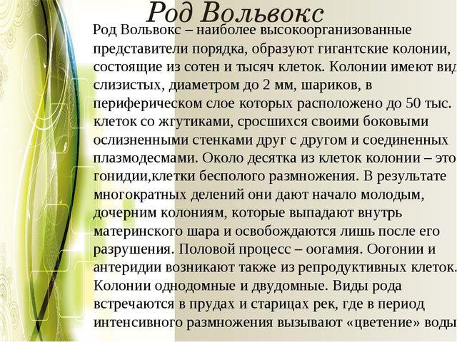 Род Вольвокс РодВольвокс– наиболее высокоорганизованные представители поряд...