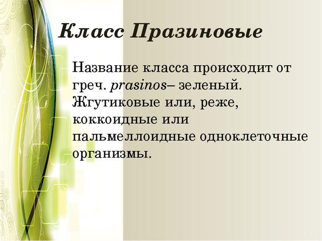 Класс Празиновые Название класса происходит от греч.prasinos– зеленый. Жгути...