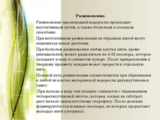 Размножение. Размножение пресноводной водоросли происходит вегетативным пут...
