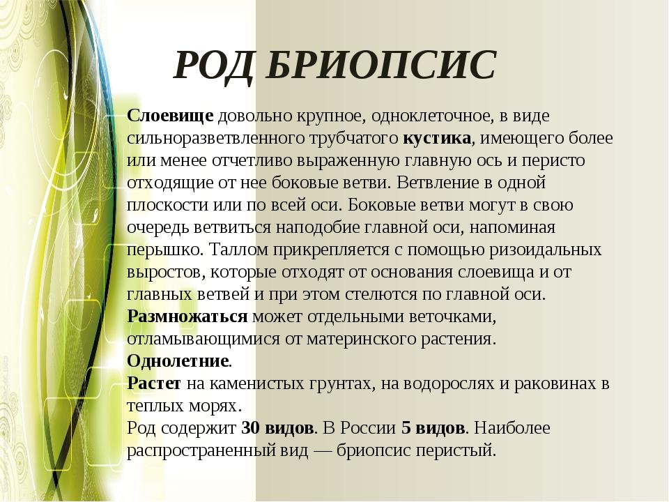 РОД БРИОПСИС Слоевищедовольно крупное, одноклеточное, в виде сильноразветвле...