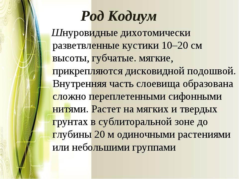 РодКодиум Шнуровидные дихотомически разветвленные кустики 10–20 см высоты, г...