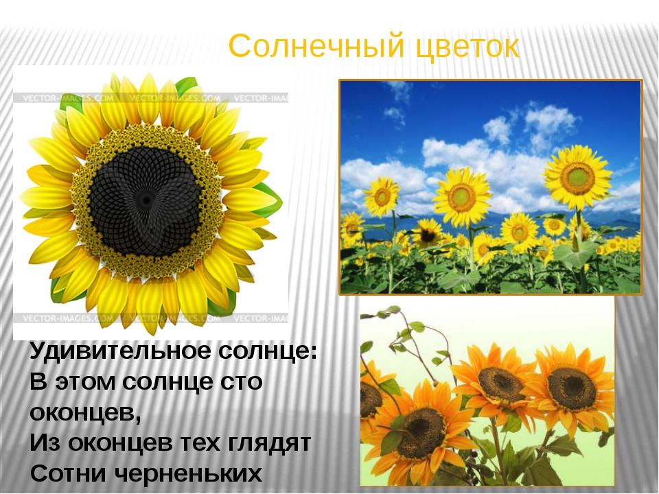 Солнечный цветок Удивительное солнце: В этом солнце сто оконцев, Из оконцев т...