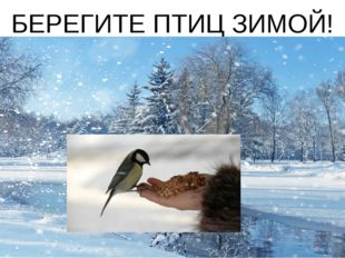 БЕРЕГИТЕ ПТИЦ ЗИМОЙ!