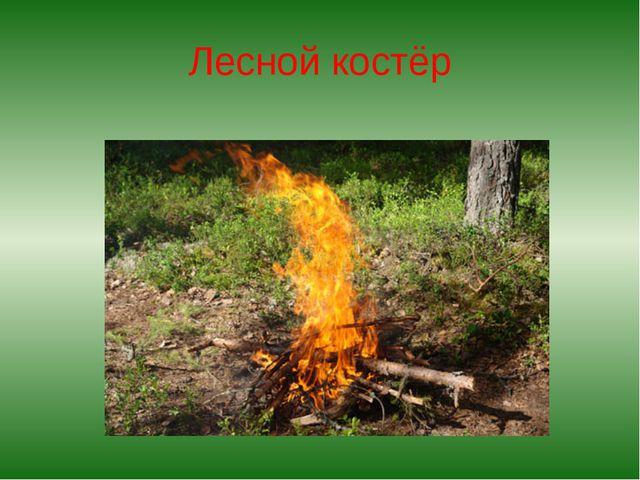 Лесной костёр