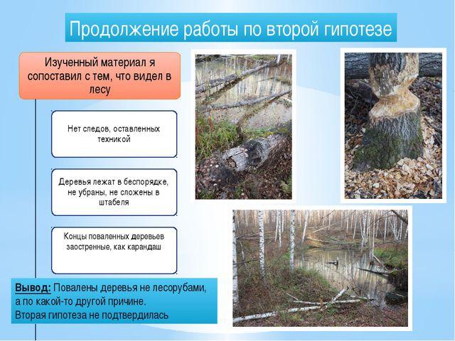 Продолжение работы по второй гипотезе Вывод: Повалены деревья не лесорубами,...