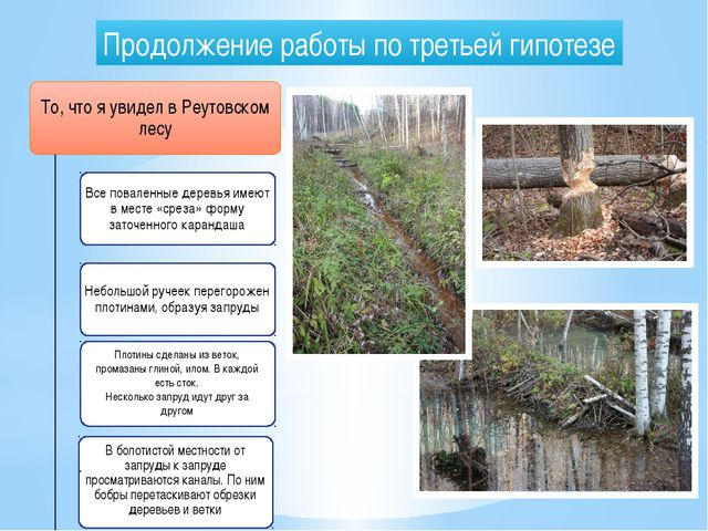 Продолжение работы по третьей гипотезе То, что я увидел в Реутовском лесу Все...