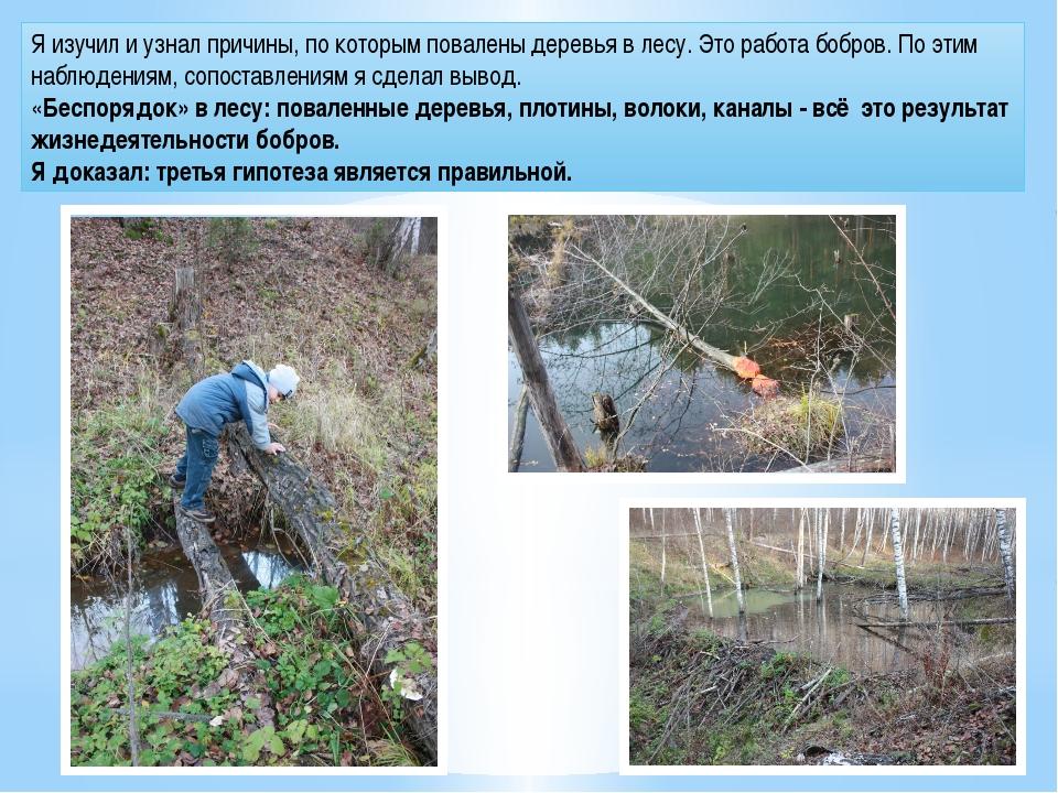 Я изучил и узнал причины, по которым повалены деревья в лесу. Это работа бобр...