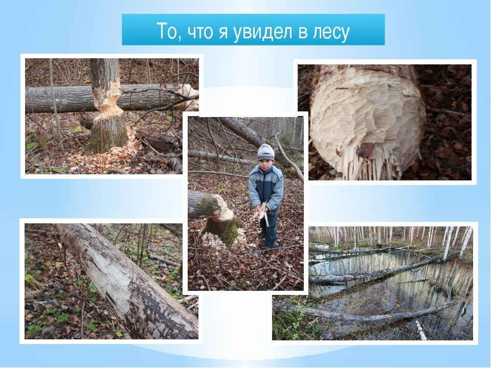То, что я увидел в лесу