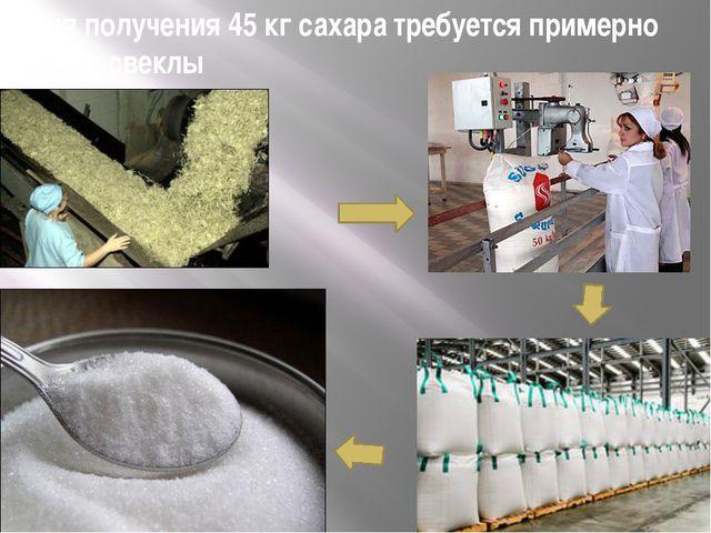Для получения 45 кг сахара требуется примерно 290 кг свеклы