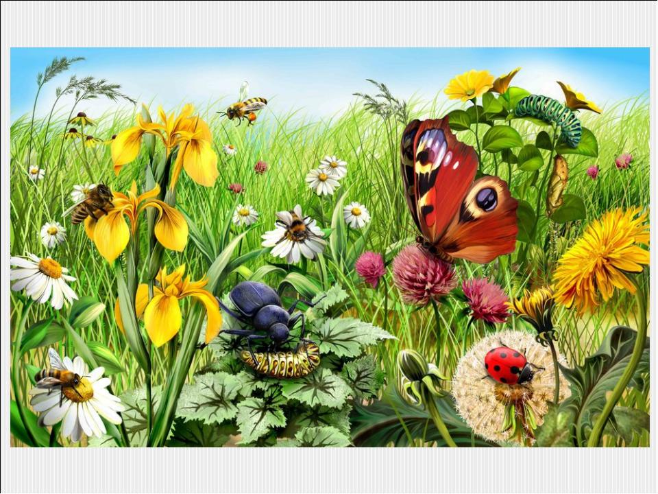 обладателей темм недели поле луг сад того, термобелье