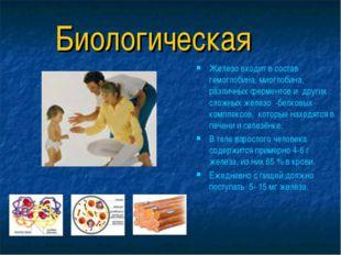 Биологическая Железо входит в состав гемоглобина, миоглобина, различных ферме