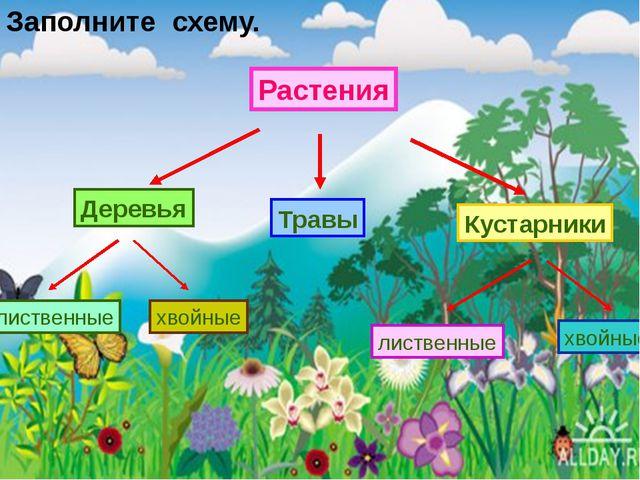 Растения Кустарники Деревья Травы хвойные лиственные лиственные хвойные Запол...