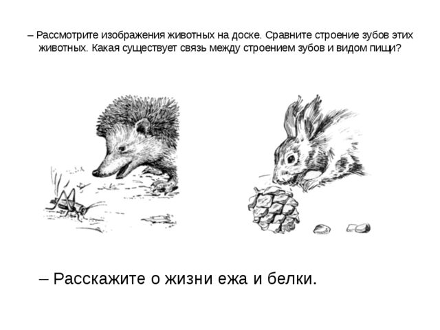 – Рассмотрите изображения животных на доске. Сравните строение зубов этих жи...