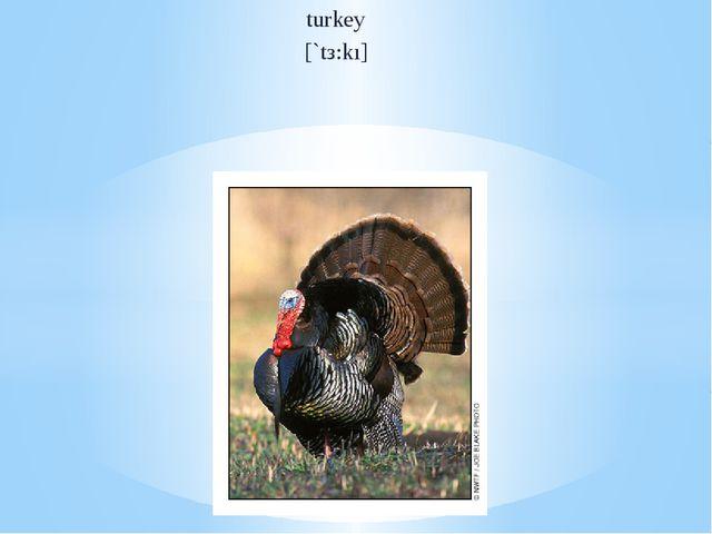 turkey [`tз:kı]