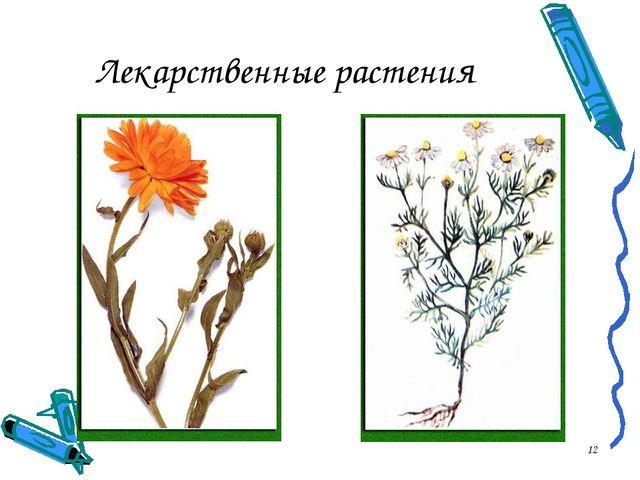 * Лекарственные растения