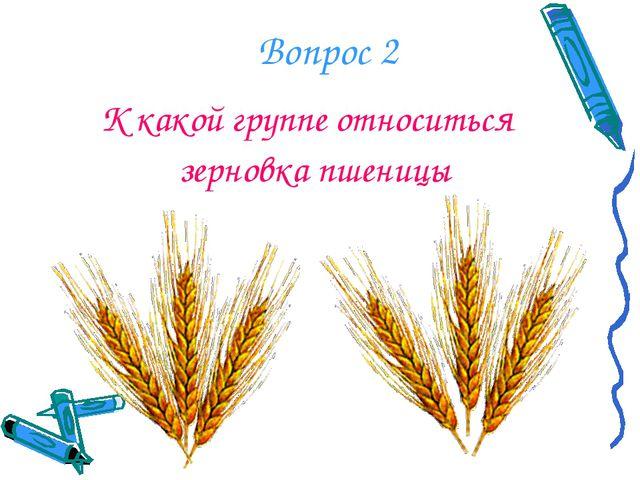 К какой группе относиться зерновка пшеницы Вопрос 2