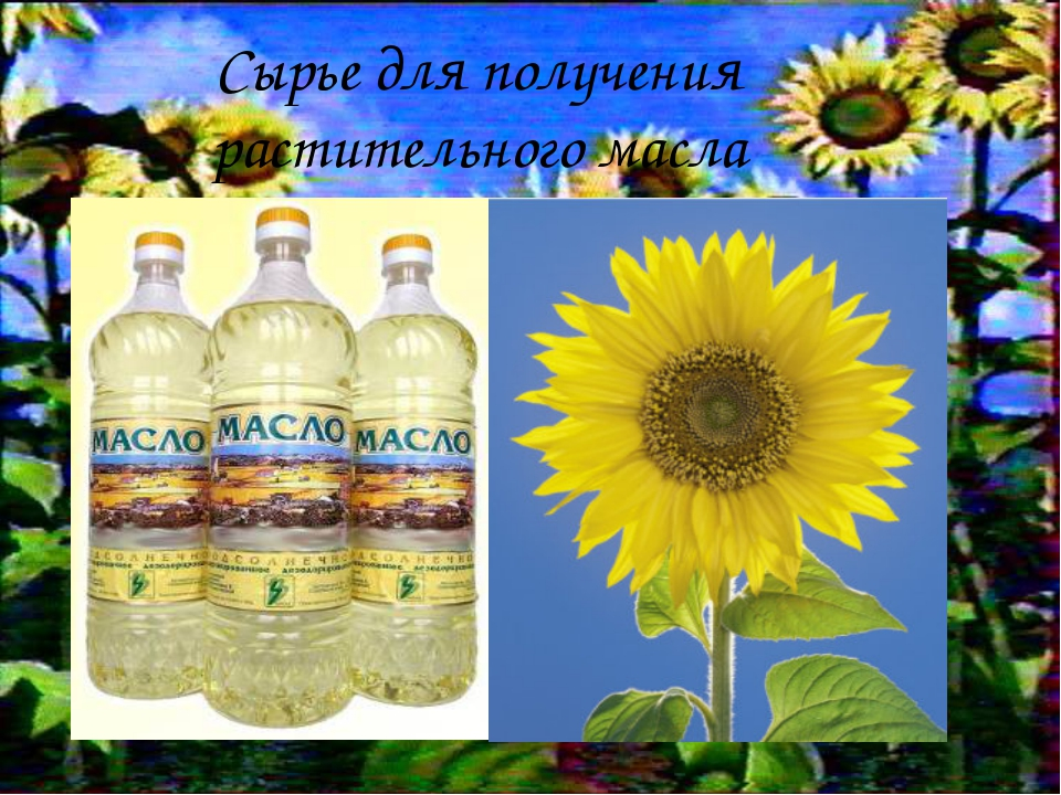 * Сырье для получения растительного масла
