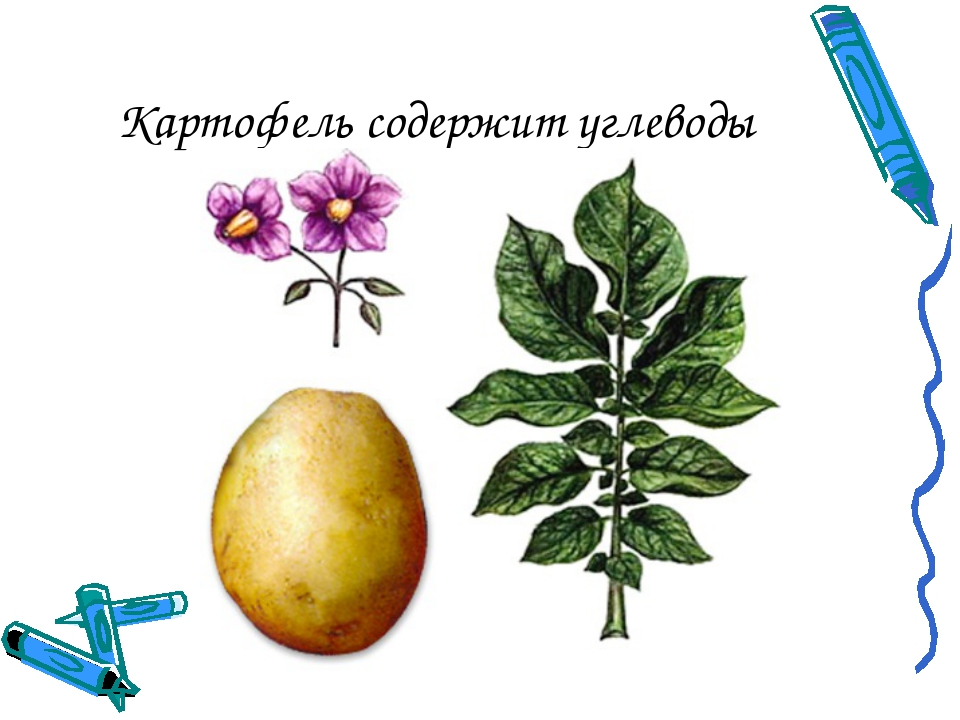Картофель содержит углеводы
