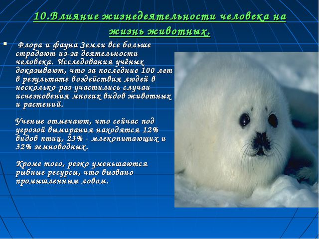 10.Влияние жизнедеятельности человека на жизнь животных. Флора и фауна Земли...