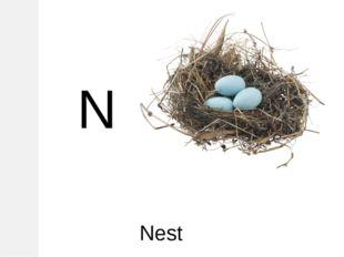 N Nest