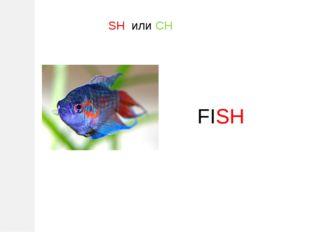 SH или CH FISH