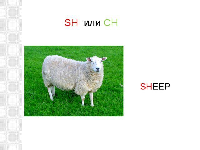 SH или CH SHEEP