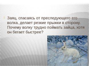 Заяц, спасаясь от преследующего его волка, делает резкие прыжки в сторону. П