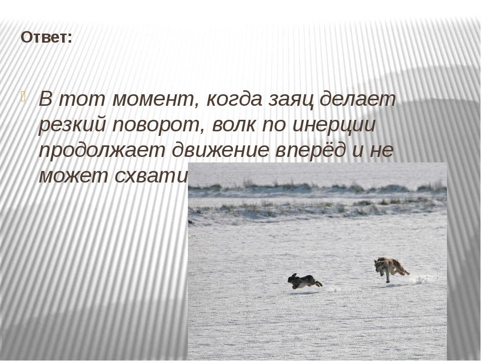 Ответ: В тот момент, когда заяц делает резкий поворот, волк по инерции продол...