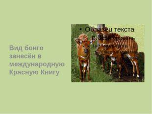 Вид бонго занесён в международную Красную Книгу