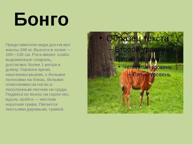 Бонго Представители вида достигают массы 200кг. Высота в холке— 100—130см....