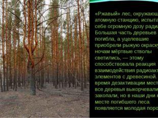 «Ржавый» лес, окружающий атомную станцию, испытал на себе огромную дозу радиа